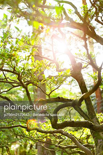 Sunbeams light up trees - p756m2122643 by Bénédicte Lassalle