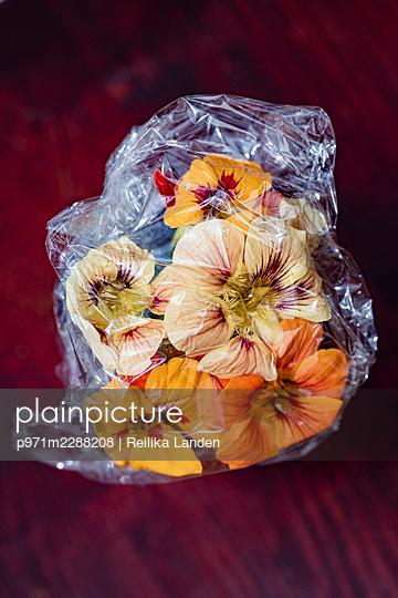 Flowers in plastic foil - p971m2288208 by Reilika Landen