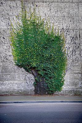 Wallbush - p1125m917345 by jonlove