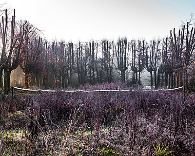 Overgrown abandoned tennis court in frosty park - p429m1418135 by David Cleveland