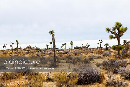 Palm Springs - p756m1158722 von Bénédicte Lassalle