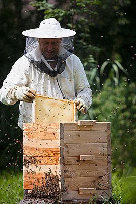 Male beekeeper examining bee hive at farm - p301m1070134f by Halfdark
