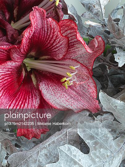Blume - p1376m2142235 von Melanie Haberkorn
