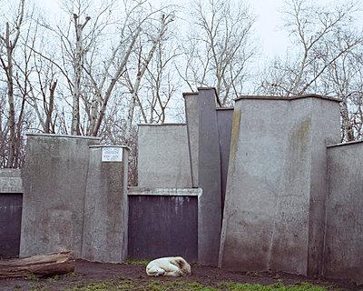 Eisbärengehege - p1214m1531777 von Janusz Beck