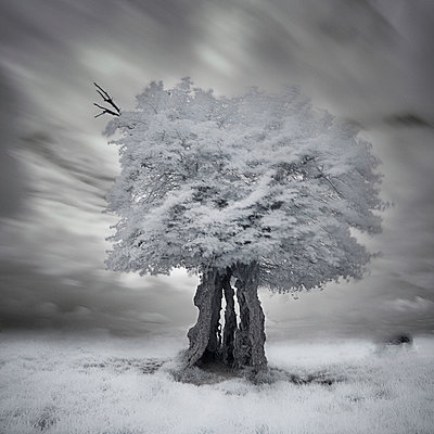 Infrared tree - p1137m932508 by Yann Grancher