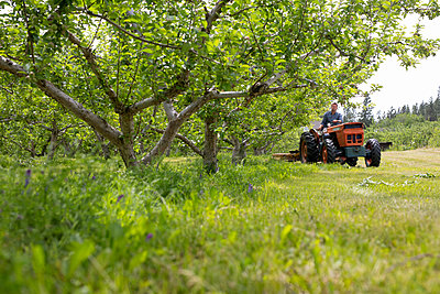 Male farmer driving tractor in orchard - p1192m2033634 by Hero Images