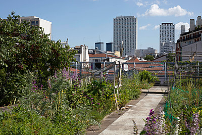 Roof community garden - p445m2125947 by Marie Docher