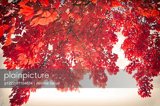 Herbstfarben - p1222m1104834 von Jérome Gerull