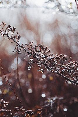 Regen im Herbst - p1006m1425224 von Danel