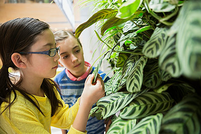 Students examining plants at science center - p1192m1019879f by Hero Images