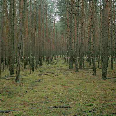 Forest, Wendland, Germany - p1214m1017182 by Janusz Beck