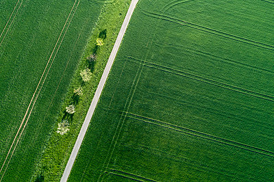 Aerial view of treelined road through agricultural fields Franconia, Bavaria, Germany - p300m2121810 by Martin Rügner