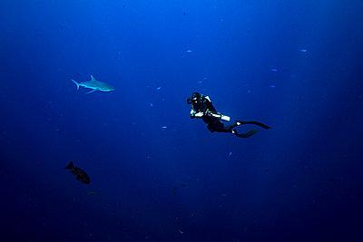 Palau, Blue Corner, Diver and grey reef shark (Carcharhinus amblyrhynchos) underwater - p300m2198351 by Gerald wak