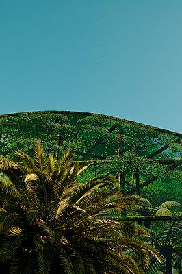 Gebäude mit Palmen in Nelson - p470m1573208 von Ingrid Michel