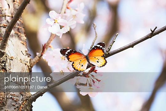 Butterfly - p1006m1051197 by Danel
