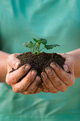 Plant growing out of soil - p4427746f by Design Pics