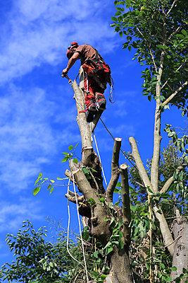 Baumfäller auf einer Baumkrone - p1553m2143024 von matthieu grospiron
