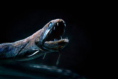 Tiefseefisch - p6640071 von Yom Lam