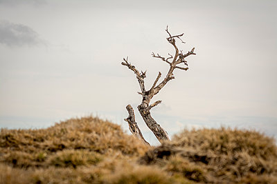 Bare tree - p813m1216705 by B.Jaubert