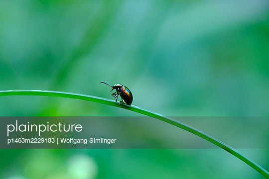 p1463m2229183 by Wolfgang Simlinger