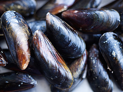 Close-up of mussels - p312m935754f by Anna Kern