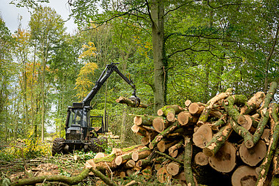 Log carrying machine stacking logs in sustainable forest - p924m2271171 by Monty Rakusen