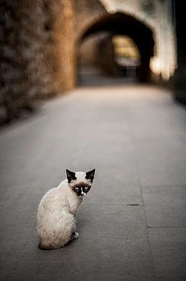 Stray cat - p971m947646 by Reilika Landen