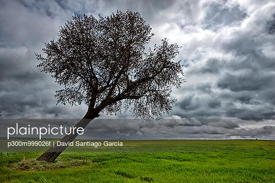 p300m999026f von David Santiago Garcia