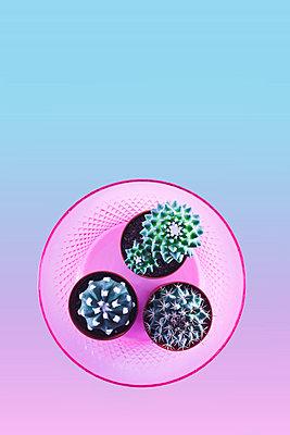 Cacti - p1149m2030982 by Yvonne Röder