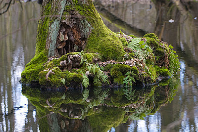 Root - p4170156 by Pat Meise