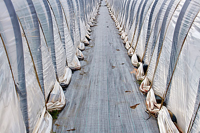 Gewächshaustunnel - p719m1574918 von Rudi Sebastian