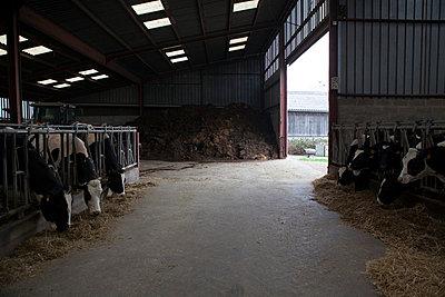 Tierhaltung - p1058m817140 von Fanny Legros