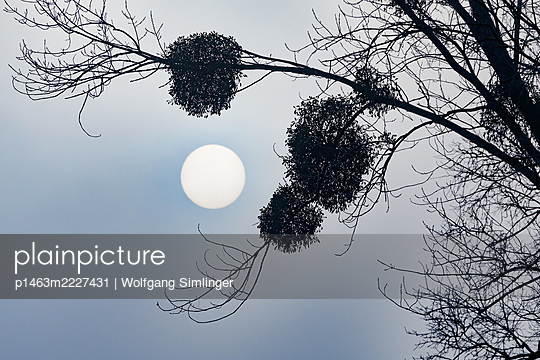p1463m2227431 by Wolfgang Simlinger