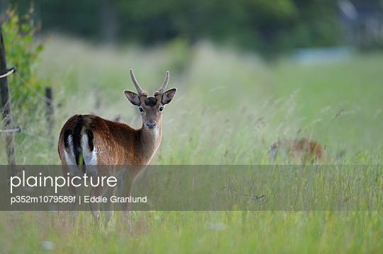 p352m1079589f von Eddie Granlund