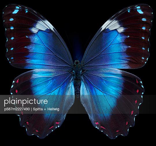 The Blue - p587m2227490 by Spitta + Hellwig