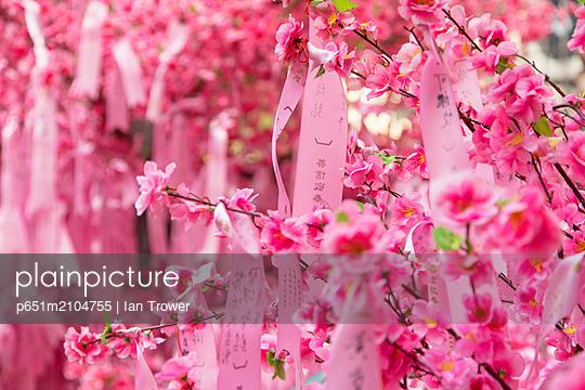 Prayer ribbons and blossom for Chinese New Year at Man Mo Temple, Sheung Wan, Hong Kong Island, Hong Kong - p651m2104755 by Ian Trower