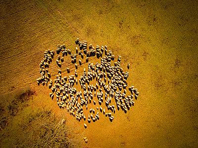 Luftbild - p1275m1090694 von cgimanufaktur