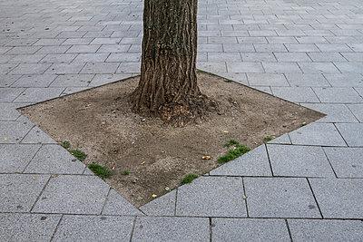 Urbaner Baum - p417m852682 von Pat Meise