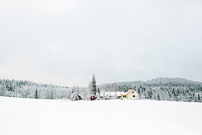Finland, Jyvaskyla, Saakoski, Landscape of winter forest with houses in foreground - p352m1141630 by Eija Huhtikorpi