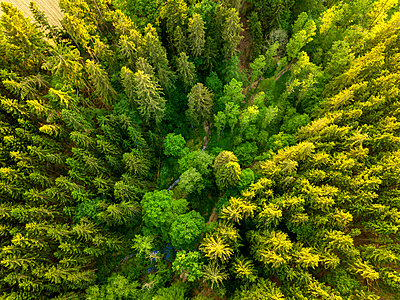 Germany, Bavaria, Aerial view of forest - p300m1588054 by JLPfeifer