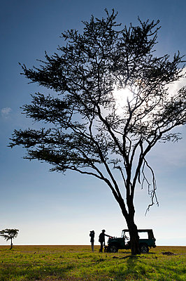 Client and guide having breakfast beneath large acacia tree on grassland, Ol Pejeta Conservancy; Kenya - p442m999960 by Ian Cumming