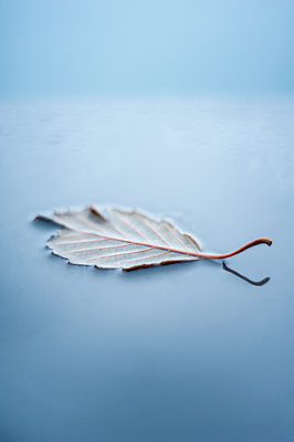 Floating leaf - p971m1503517 by Reilika Landen