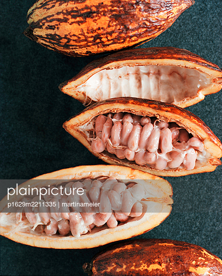 Cocoa fruits - p1629m2211335 by martinameier.ch