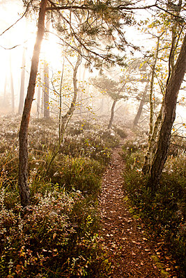 Morgennebel im Moorgebiet - p533m1088386 von Böhm Monika