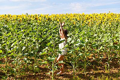 Sunflower field - p756m1057164 by Bénédicte Lassalle
