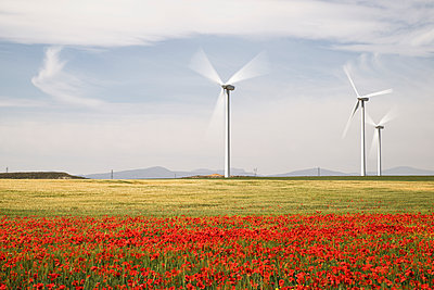 Wind turbines on field with poppy flowers in foreground - p1166m1473638 by Cavan Images