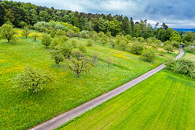Germany, Baden-Wuerttemberg, Swabian Franconian forest, Rems-Murr-Kreis, Aerial view of meadow with scattered fruit trees and road - p300m1587236 by Stefan Schurr