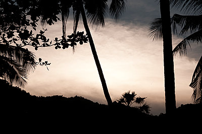 Palm trees at sunset - p1273m1496175 by Melanka Helms