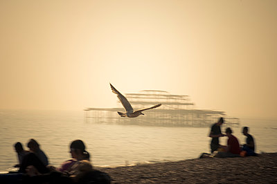 The bird - p1473m1559609 by Morgane Launay