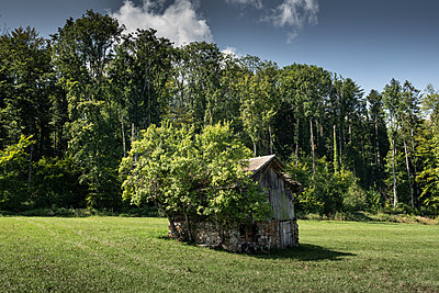 Overgrown little shed - p1354m2296827 by Kaiser
